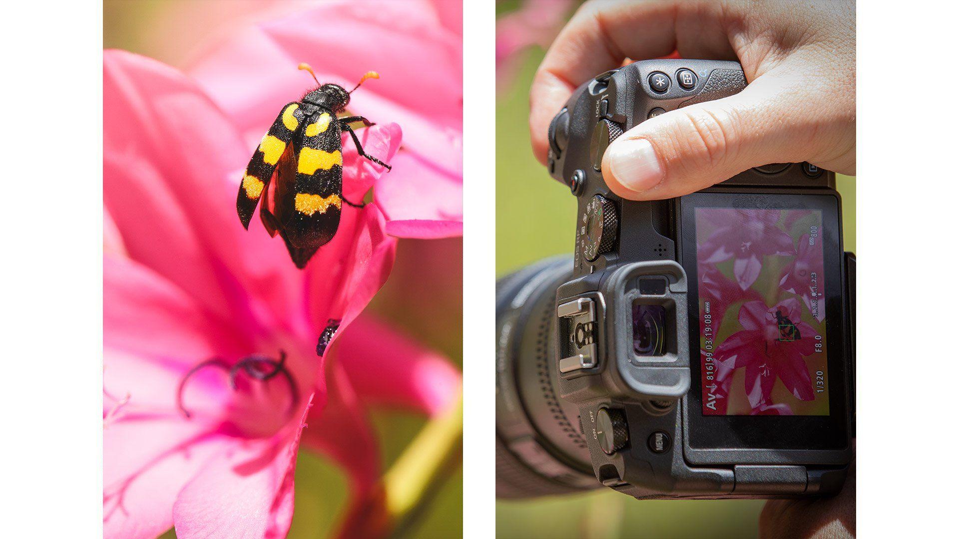 Canon EOS RP capturing a bee